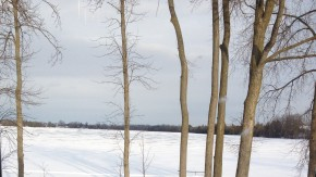 cot-trees